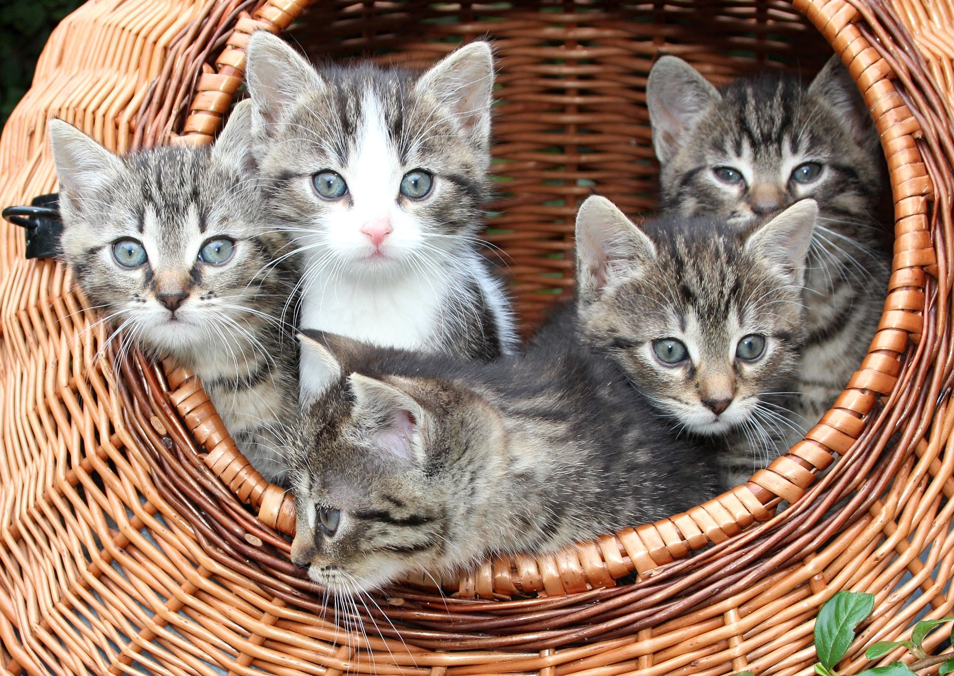 Bringing home baby cat 5 essential tips for success bringing home baby cat 5 essential tips for success thecheapjerseys Images